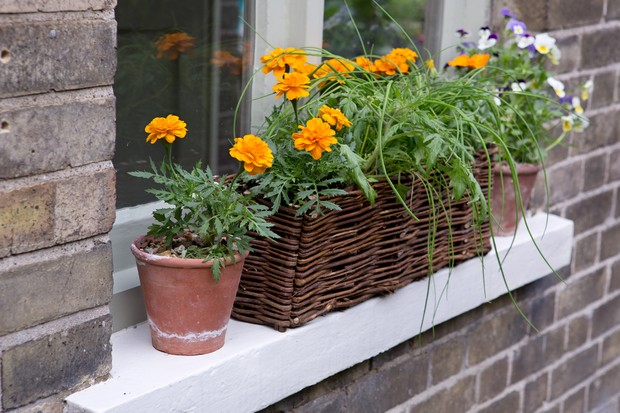 tomato-and-chive-window-box-2