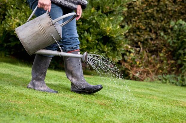 Applying liquid lawn feed