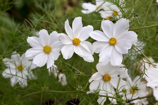 Best Plants With White Flowers Gardenersworld