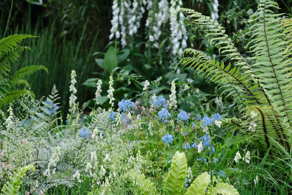 Planting Scheme for a Shady Border