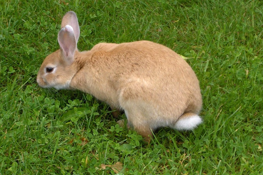 How do I keep rabbits out of my garden?