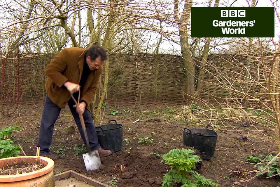 How To Plant Hostas Video Bbc Gardeners World Magazine
