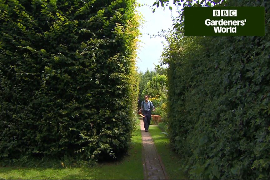 How to prune a hedge video