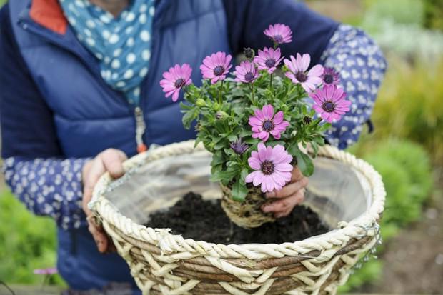 Planting up the hanging basket