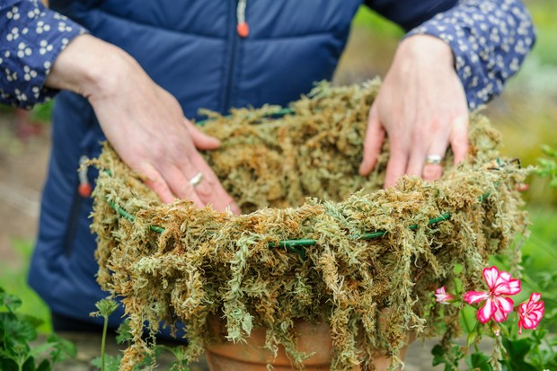 Lining the basket with sphagnum moss
