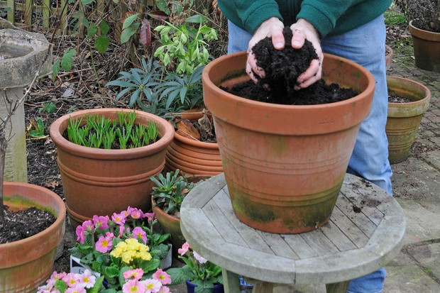 Filling the pot with compost
