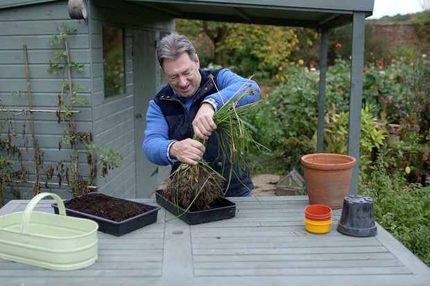 Lifting herbs for winter