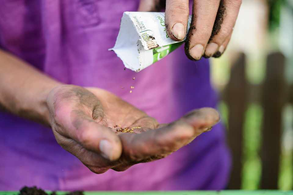 Tipping seeds out of a packet into the palm of a hand