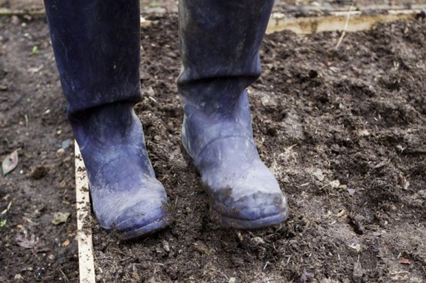 Tread the soil to firm it back in