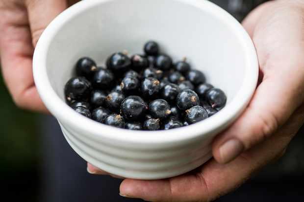 blackcurrants-high-in-vitamin-c-2