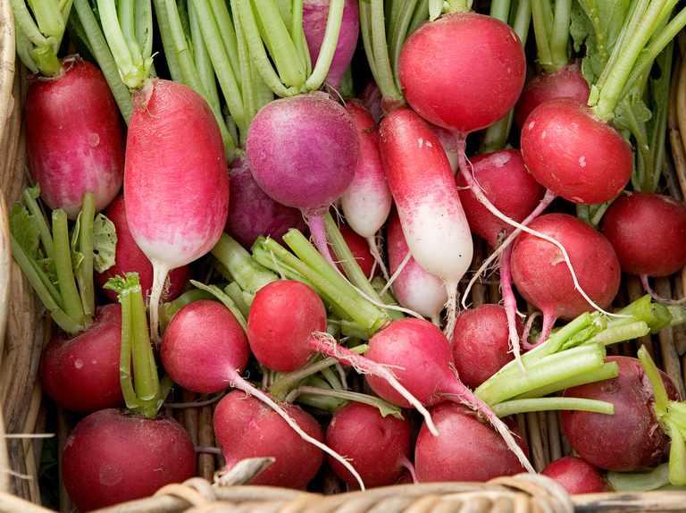 The best radish varieties to grow