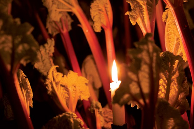 Forced rhubarb illuminated by candlelight