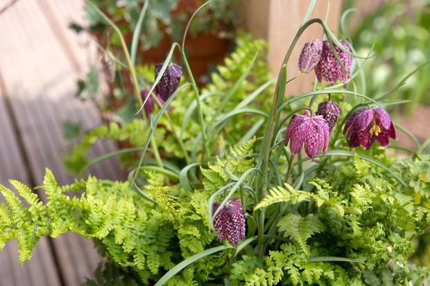 fritillaria-and-fern-pot-2