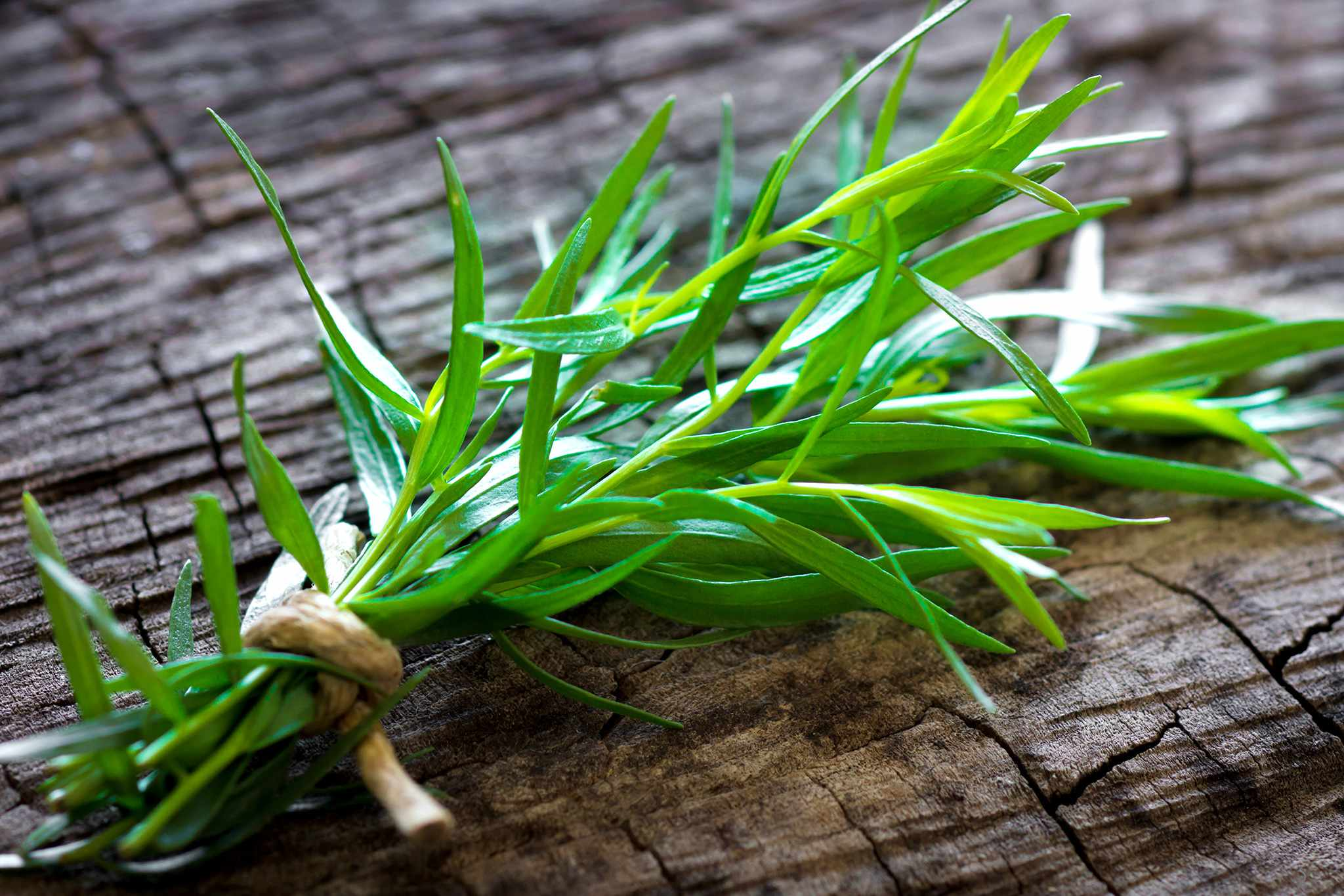 Bunch of tarragon. Credit: Getty Images