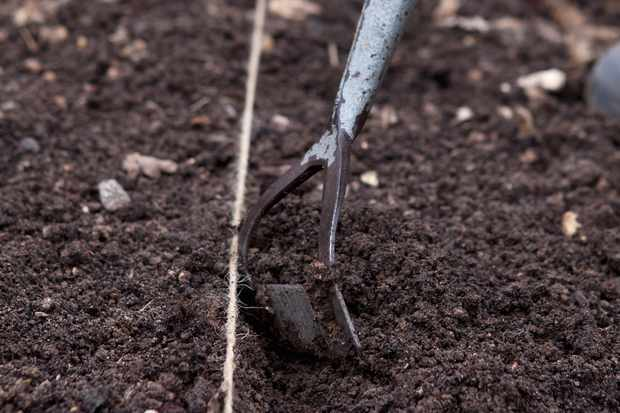 using-a-dutch-hoe-to-make-a-seed-drill-3