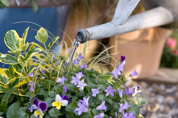 watering-in-the-plants-4