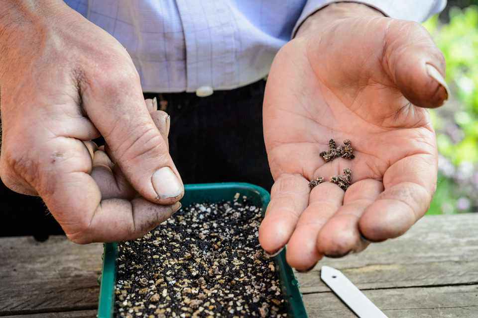 Five Tips for Sowing Seeds in Shade