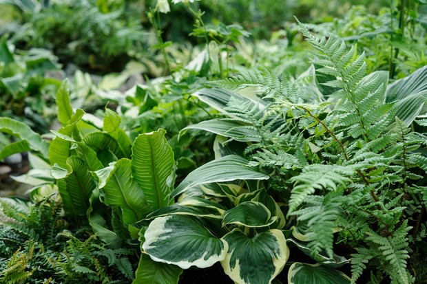 ferns-and-hostas-in-a-shady-planting-scheme-2