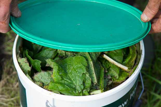How to make a comfrey liquid feed