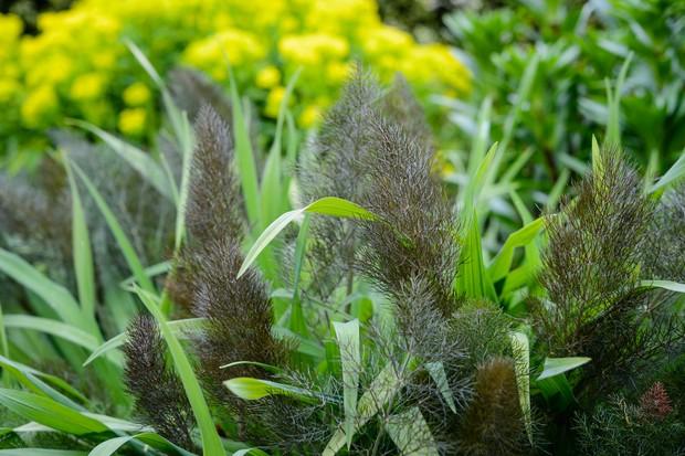 bronze-fennel-2