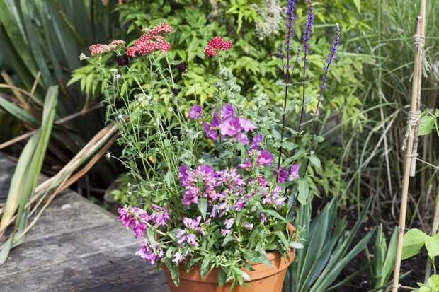 How to create a year-round pot display