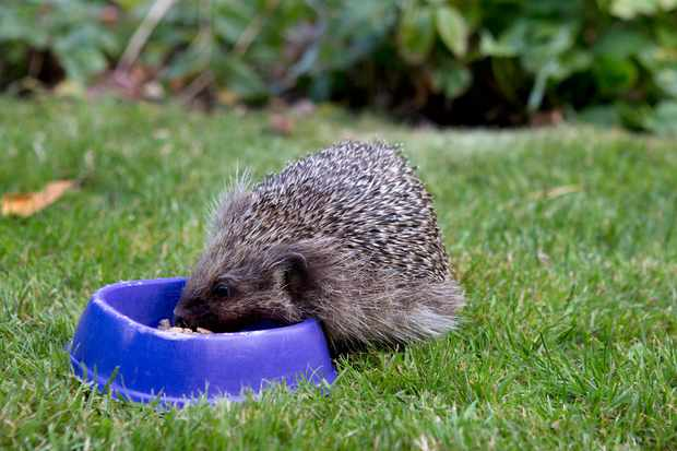 Garden Wildlife Jobs for April