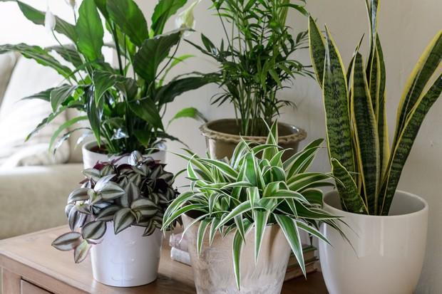 houseplants-for-a-shady-corner-3
