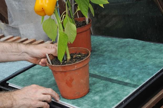 Placing plants on the capillary matting