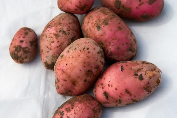 potato-desiree