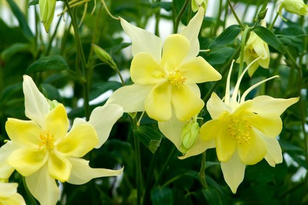 Five spring perennials for may gardenersworld 29620 mightylinksfo