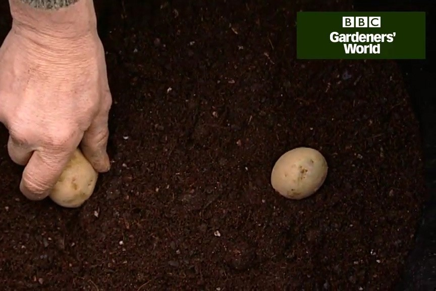 How to grow potatoes in a container video