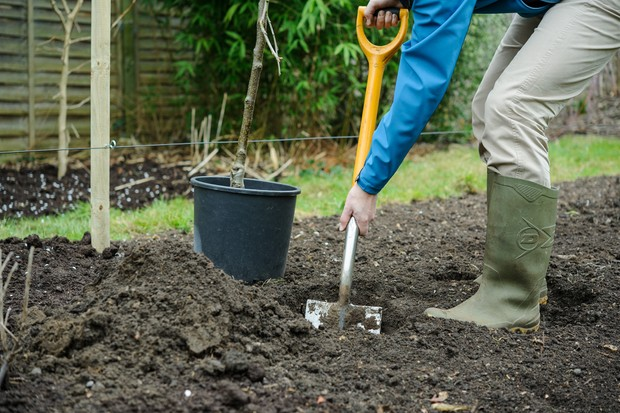 How to plant a tree - digging a hole
