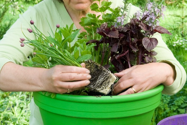 Herb pot for vegetable dishes - adding the herbs