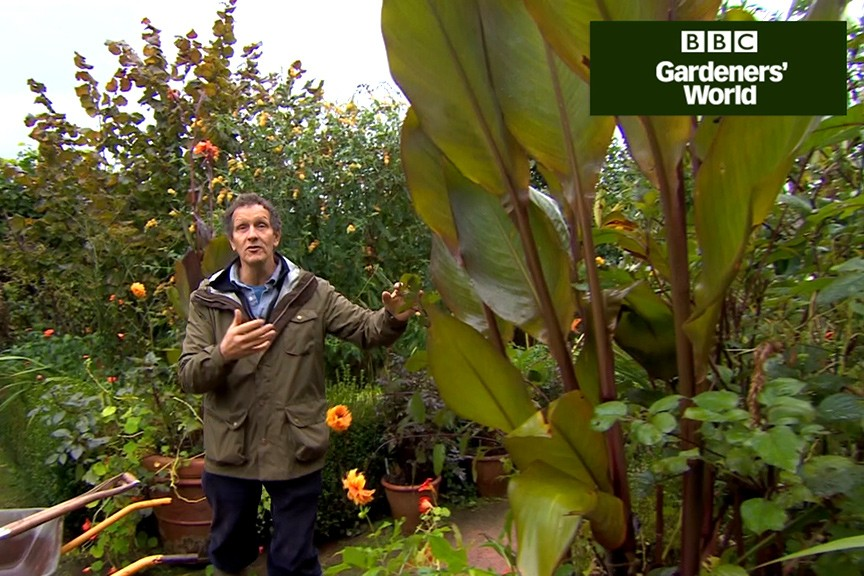 How to tell when to bring tender perennials indoors video