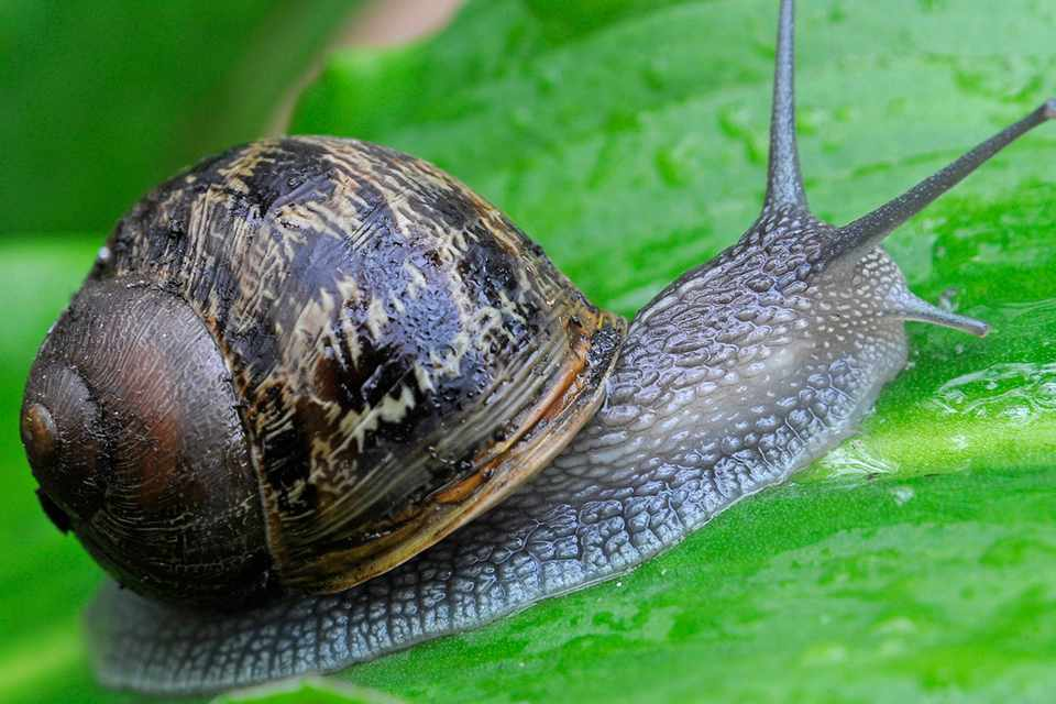 A snail on a leaf
