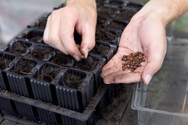 sowing-sweet-pea-seeds-4