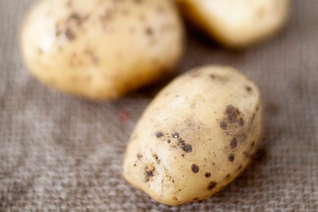 White-skinned potato 'Maris Peer'