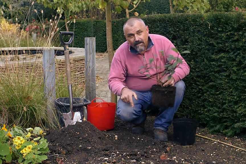 Planting shrubs No Fuss Guide video