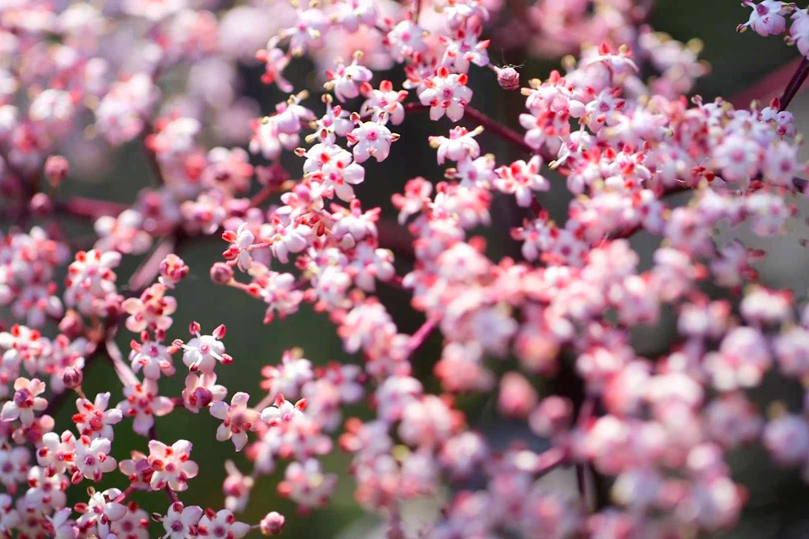 No Fuss Guide Understanding botanical plant names