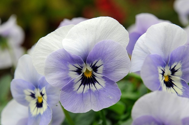 viola-sorbet-marina-3