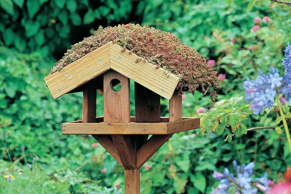 How to make a green roof for your bird table