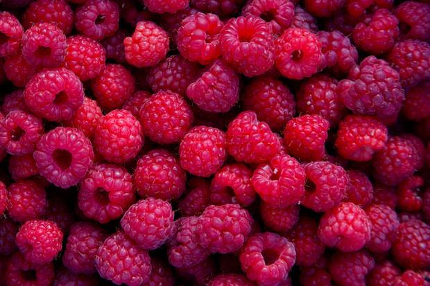 summer-fruiting-raspberries-2