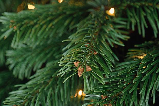 Avoid Christmas Tree Needle Drop