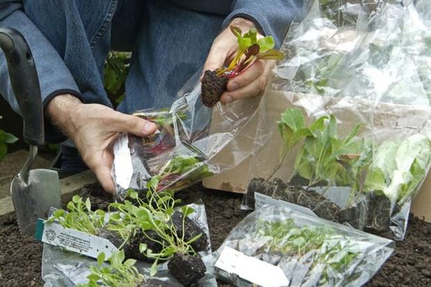 unpack-the-plug-plants-immediately-and-moisten-the-rootballs