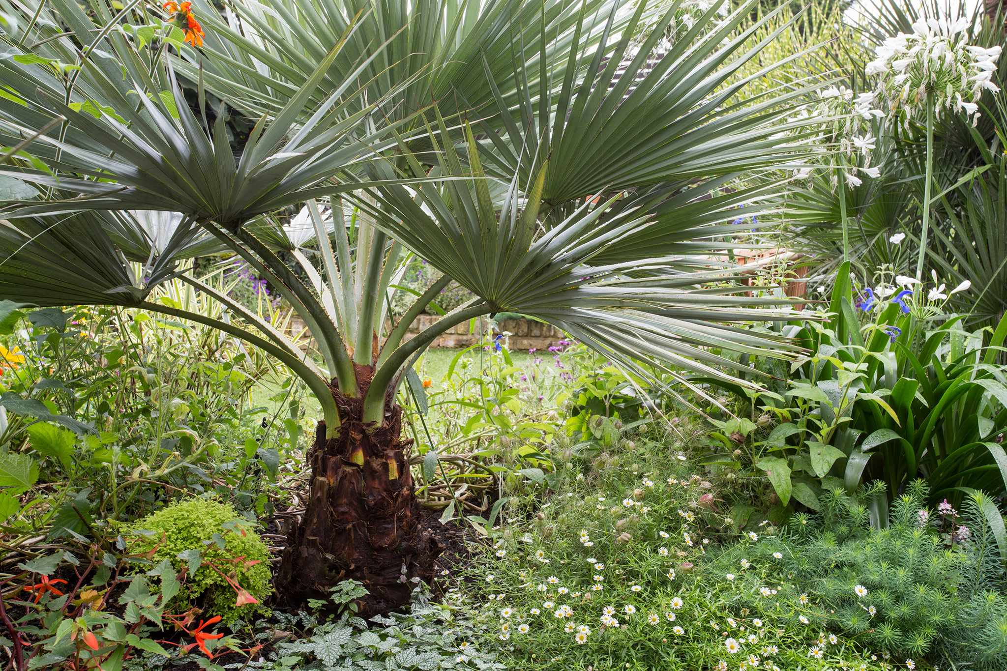 Best Plants for an Exotic Garden