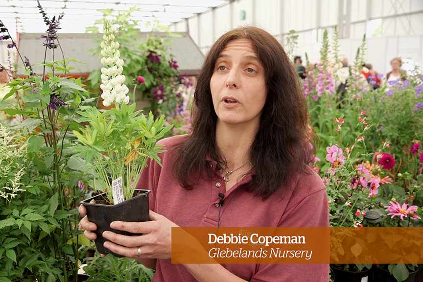 Caring for lupins - Golden Rules