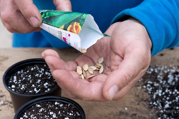 sowing-courgette-seeds-3
