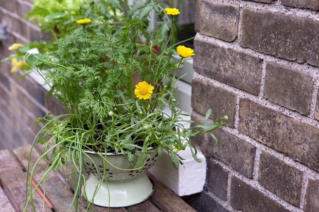 carrot-and-spring-onion-container-idea-2