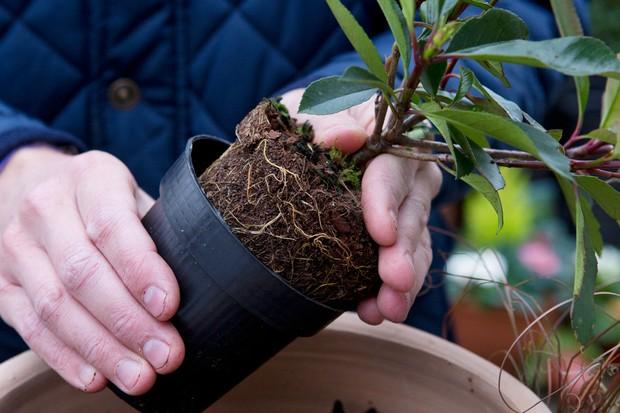 adding-the-plants-4