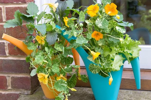 kohlrabi-and-beetroot-growing-in-watering-cans-2